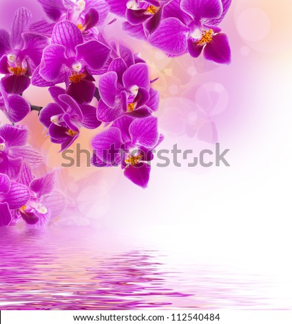 Pink orchids in the drops of dew on a white background