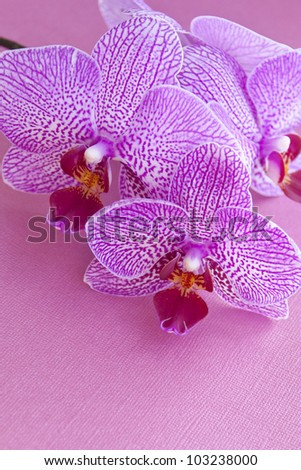 Pink orchids on pink textured paper with copy space.
