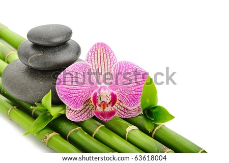 Pink orhid and stones on the bamboo grove