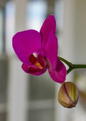 Pink orquidea in the kitchen