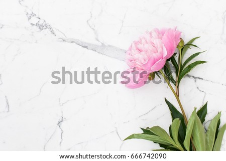 Pink peonies on white marble background - Shutterstock ID 666742090