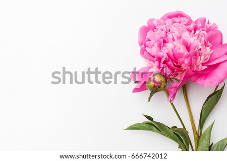 Pink peonies on white wooden background - Shutterstock ID 666742012