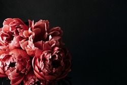 Pink peonies over dark background. Moody floral baroque style image