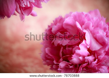 Pink peony flowers in retro vintage style