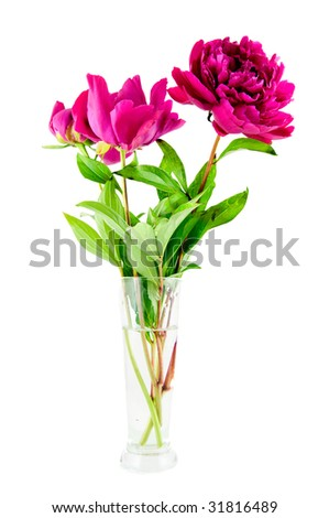 Pink peony in vase on white background