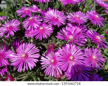 Pink Pink Pink Pink Flowers