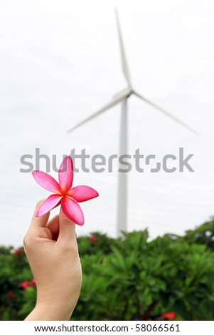 Pink plumeria and windmill