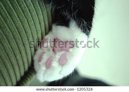 pink popcorn paw