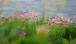 pink prairie garden perennial flowerbed with a different set of flowers of a flowerbed of a larger plant just flowering
