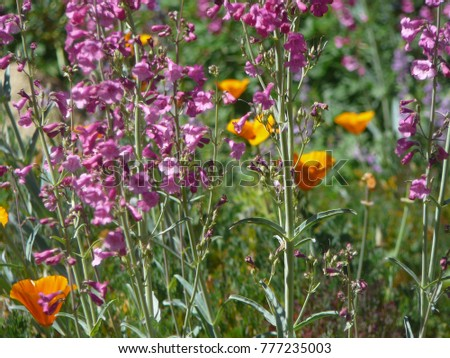 Pink Purple And Orange Wildflower Blooms During Spring In The