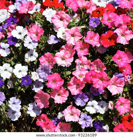 pink, red, white and violet flowers in spring