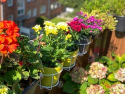 Pink red yellow blooming Chrysanthemum flowers in decorative flower pots white baskets hanging on balcony fence high angle view, floral wallpaper background with autumn balcony flowers
