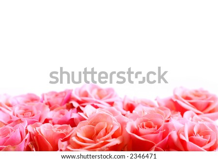 Pink rose border with white space for copy
