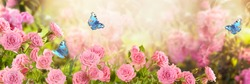 Pink rose flower and flying blue peacock eye butterflies in fabulous blooming spring fantasy garden on blurred sunny light background, mysterious fairy tale summer floral wide panoramic holiday banner