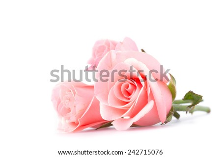 pink rose flower on white background #242715076