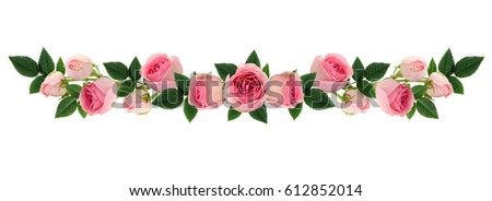Pink rose flowers and buds line arrangement isolated on white. Flat lay, top view. #612852014