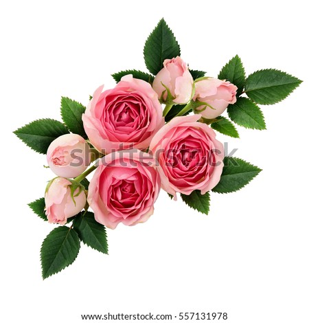 Pink rose flowers arrangement isolated on white - Shutterstock ID 557131978