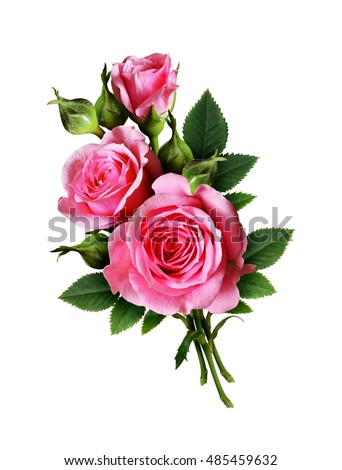Pink rose flowers bouquet isolated on white #485459632