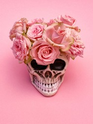 Pink rose flowers in decorative Skull Planter on pink background. Minimal romantic love concept. Human Skull Head Design Flower Pot with beautiful Rose blossom. Halloween skull head with flowers