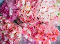 pink rose flowers in plastic bulk at Flower Market