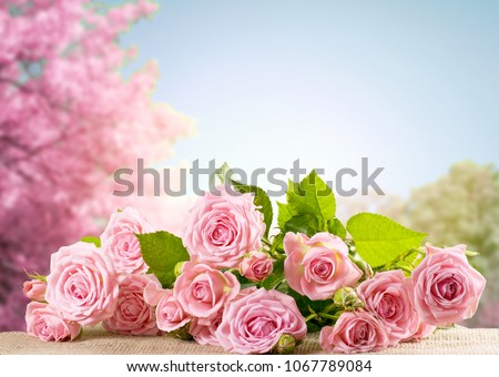 Pink rose flowers lying on sackcloth and spring trees with sakura blossoming branch against the blue sky #1067789084