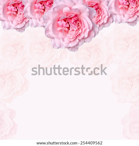 Pink rose flowers with pink texture background, frame, close up.