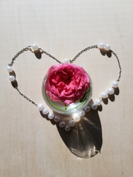 Pink rose in a round glass with water, in the contour of a heart made of round white beads on a chain, in the sun, on a light beige background (top view).