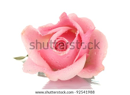 Pink rose isolated on white - stock photo