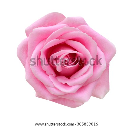 Pink rose isolated on white background. Deep focus. #305839016