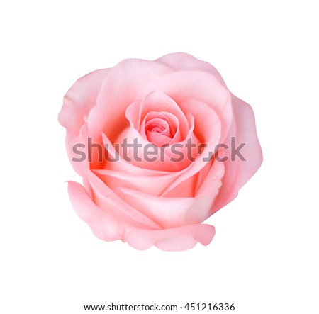 Pink rose isolated on white background, soft focus. #451216336