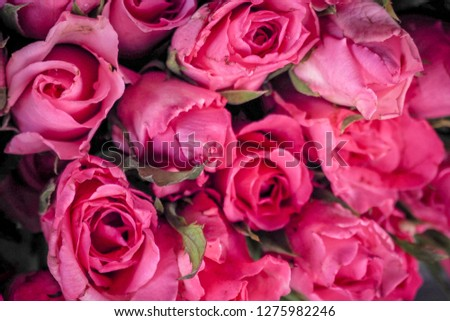 Free Photos Beautiful Rose Flower Of Thailand Avopix