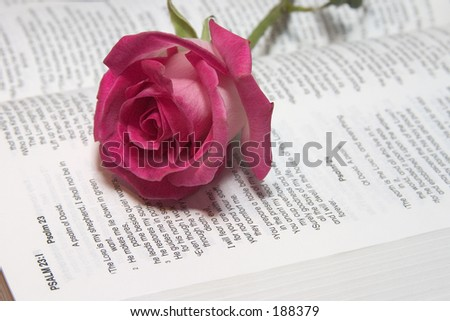 Pink rose on lord's prayer