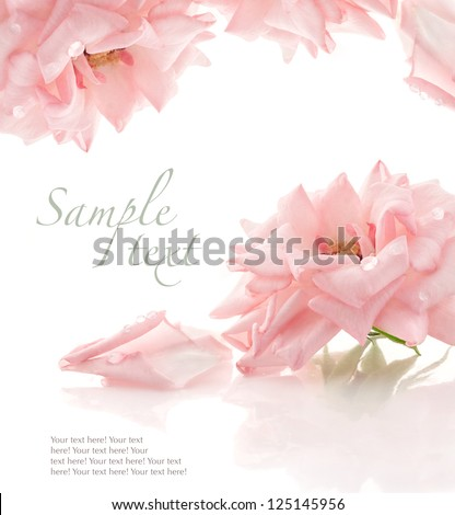 Pink rose on white background, with sample text