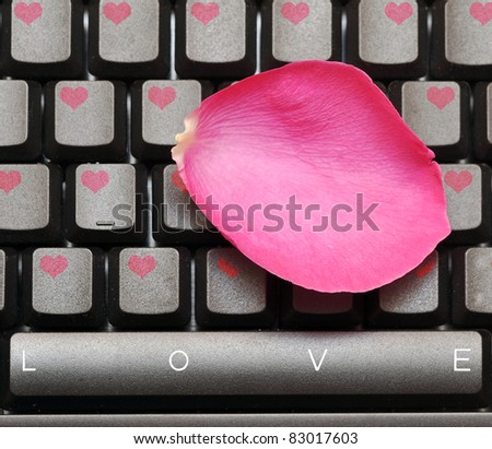 pink rose petal and keyboard, love concept
