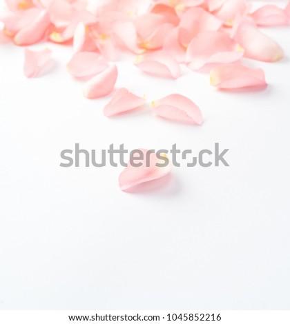 pink rose petals #1045852216