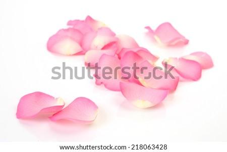 pink rose petals #218063428
