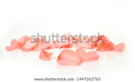 pink rose petals on white background #1447262765