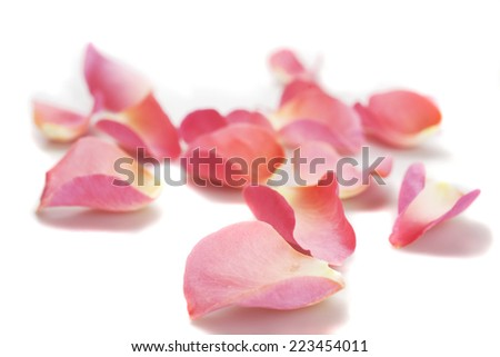 Pink rose petals on white background #223454011