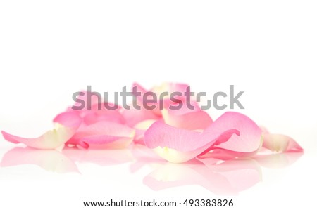 pink rose petals on white background #493383826