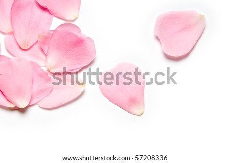 Pink rose petals on white background #57208336