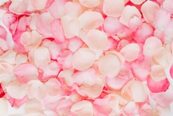 Pink rose petals. Valentine's day background. Flat lay, top view