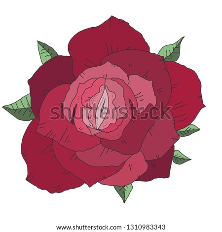 Pink rose, rose, vagina