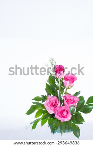 Pink roses. #293649836