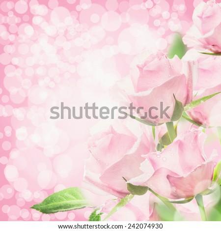 free photos pink roses bokeh background floral corner border