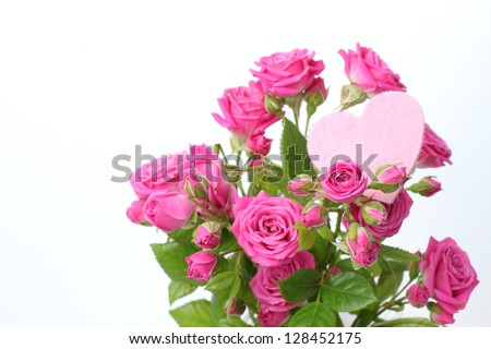 Pink roses bunch closeup isolated on white background