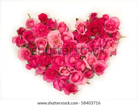 Pink roses Heart shape.on white background.