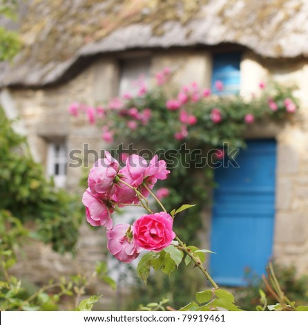 Pink roses in front of a beautiful rural cottage with tatched roof