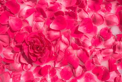 Pink roses in milk water. Beauty Spas and Wellness treatments with rose petals in a bath with milk. The concept of purity, tenderness, freshness, youth. The summer mood.