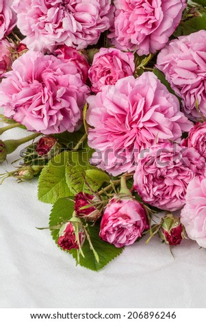 Pink roses isolated om white. #206896246
