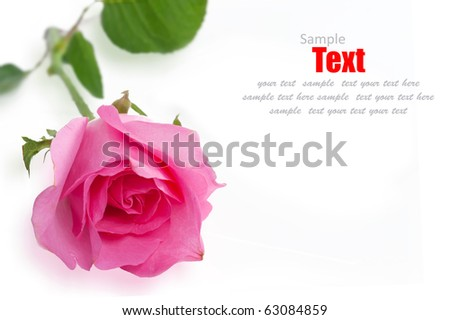 Pink roses on a white background.